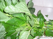 one bundle of Jamaican callaloo