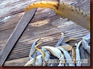 crab nail