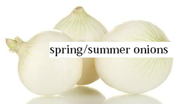 spring/summer onions
