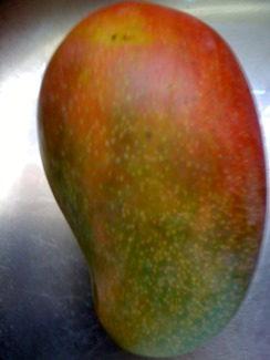 East Indian mango