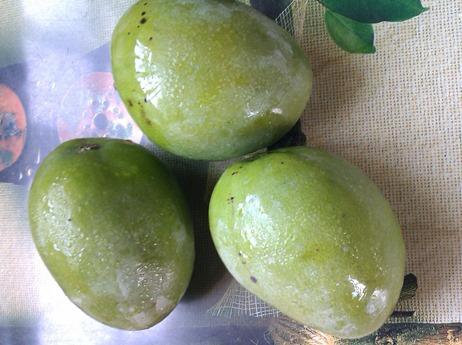 Jamaican fine skin mangoes