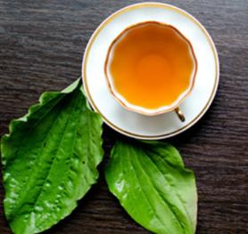 Plantain medicinal herb - Jamaican Cookery