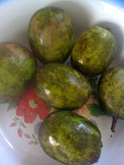 gren June plum