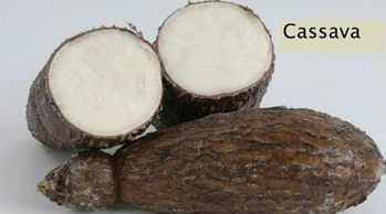 What Is Cassava Jamaican Cookery