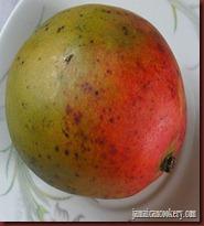 Julie mango