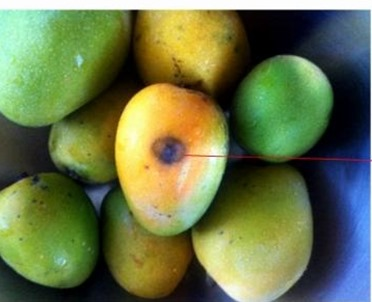 number11 mangoes