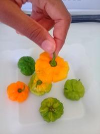 Jamaican scotch bonnet pepper