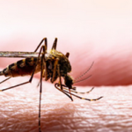 Dengue Fever: Symptoms, Causes, and Treatments